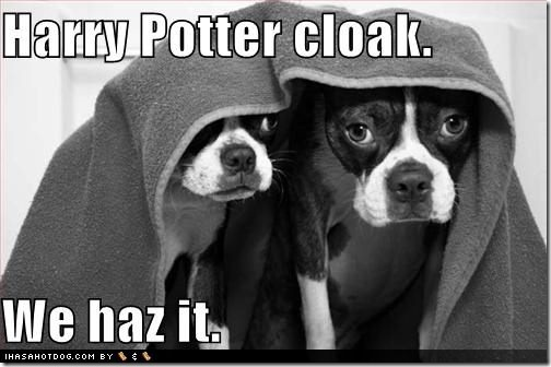 funny-dog-pictures-dogs-have-harry-potter-cloak[1]